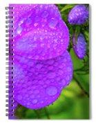 Refreshed Phlox 2 Spiral Notebook