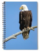 Regal Eagle Spiral Notebook