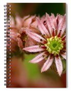 Rejoice The New Day Spiral Notebook