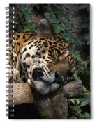 Relaxing Spiral Notebook