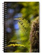 Renewal Ferns Spiral Notebook