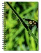 Resting Alert Dragonfly Spiral Notebook