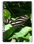 Resting - Black And White Butterfly Spiral Notebook