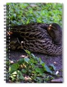 Resting But Alert Spiral Notebook