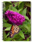 Resting Butterfly 1 Spiral Notebook