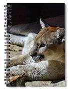 Resting Cougar Spiral Notebook