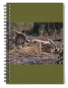 Resting Coyote Spiral Notebook