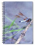 Resting Dragonfly Spiral Notebook