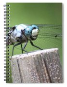 Resting Dragonfly Spiral Notebook
