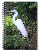 Resting Egret Spiral Notebook