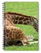 Resting Giraffe Spiral Notebook