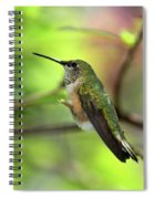 Resting Hummingbird Spiral Notebook
