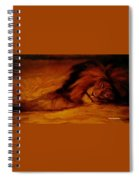 Resting Lion Spiral Notebook