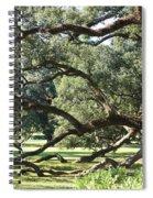 Resting Live Oaks Spiral Notebook