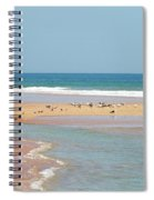 Resting Seagulls On A Sandbar Spiral Notebook