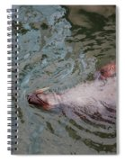 Resting Seal Spiral Notebook