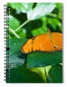 Resting--tropical Butterfly Spiral Notebook
