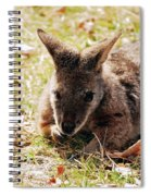 Resting Wallaby Spiral Notebook