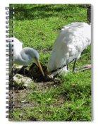 Resting Wood Stork And White Egret Spiral Notebook
