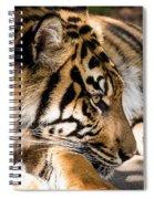 Resting Yet Watchful Tiger Spiral Notebook