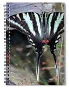 Resting Zebra Swallowtail Butterfly Spiral Notebook
