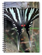 Resting Zebra Swallowtail Butterfly Square Spiral Notebook