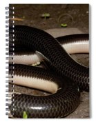 Reticulate Worm Snake Spiral Notebook