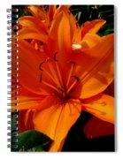 Retreating Orange Lilies Spiral Notebook