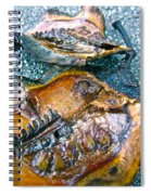 Revealing Tree Pod Spiral Notebook