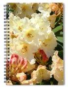 Rhodies Creamy Yellow Orange 3 Rhododendrums Gardens Art Baslee Troutman Spiral Notebook
