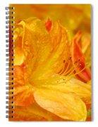 Rhodies Orange Yellow Rhododendrons Art Prints Canvas Baslee Troutman Spiral Notebook