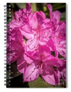 Rhododendron-close Up1 Spiral Notebook