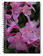 Rhododendron In The Pink Spiral Notebook