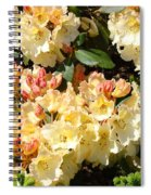 Rhododendrons Garden Art Prints Creamy Yellow Orange Rhodies Baslee Spiral Notebook