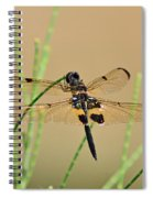 Rhyothemis Phyllis Spiral Notebook