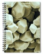 Rice Starch Granules Spiral Notebook