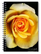 Rich And Dreamy Yellow Rose   Spiral Notebook
