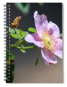 Rimrock Rose Spiral Notebook