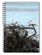 Ring Billed Gull Spiral Notebook