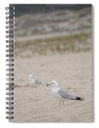 Ring - Billed Gull Spiral Notebook