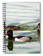 Ring-necked Trio Spiral Notebook