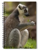 Ring-tailed Lemur Holding A Clump Of Grass Spiral Notebook