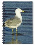 Ringed Billed Sea Gull Spiral Notebook