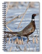 Ringneck Pheasant Rooster In Snow Spiral Notebook