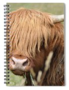 Ringo - Highland Cow Spiral Notebook