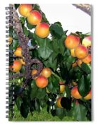 Ripe Apricots Spiral Notebook
