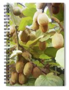 Ripe Kiwi Fruit On The Branch Spiral Notebook
