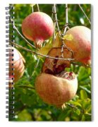 Ripe Pomegranates Spiral Notebook