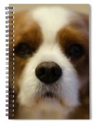 River Dog Closeup Spiral Notebook