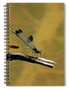 River Jewelwing Spiral Notebook